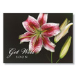 Get Well Lily Business Get Well Cards